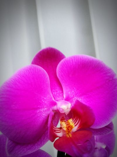 exotic beauty Flover Pink Orchids Exotic Nature Home Decorative