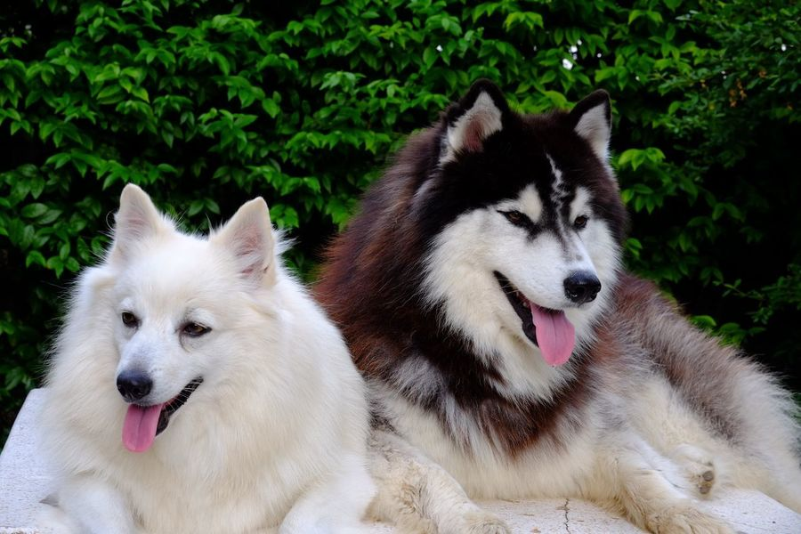 My dogs love. Pets Animal Themes Domestic Animals Dog Mammal No People Day Close-up Nature Outdoors Togetherness