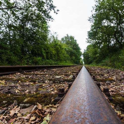 Surface level of railroad track amidst trees against clear sky