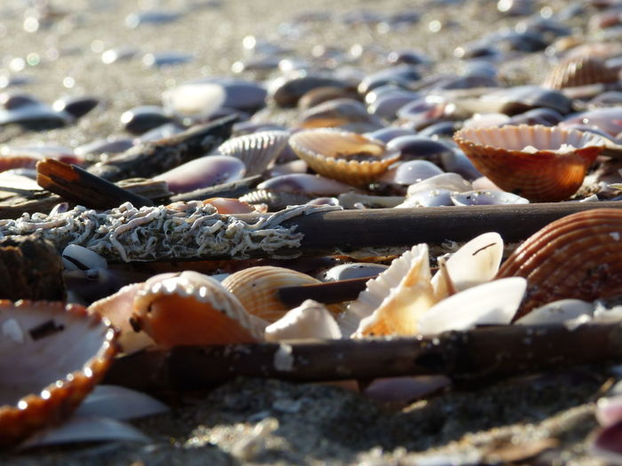 EyeEm Selects presso Catania Sicily Beach Shells No People Seafood Outdoors Large Group Of Objects Day Nature Scenics Beauty In Nature Sea Life Landscape The Week On EyeEm EyeEmNewHere From My Point Of View EyeEm Best Shots Exceptional Fotographs Travel Destinations
