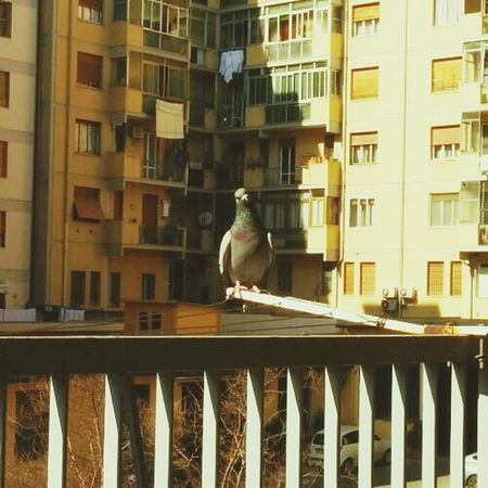 Good Morning Whats Up Funny Bird