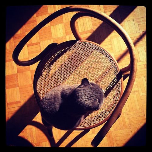"""Rodchenko style title :""""cat on chair"""". #cat ##rodchenko #chair #shadow #perspective #stupidcat #reflection #architecture Stupidcat Architecture Cat Reflection Shadow Chair Perspective Amselcom Rodchenko"""