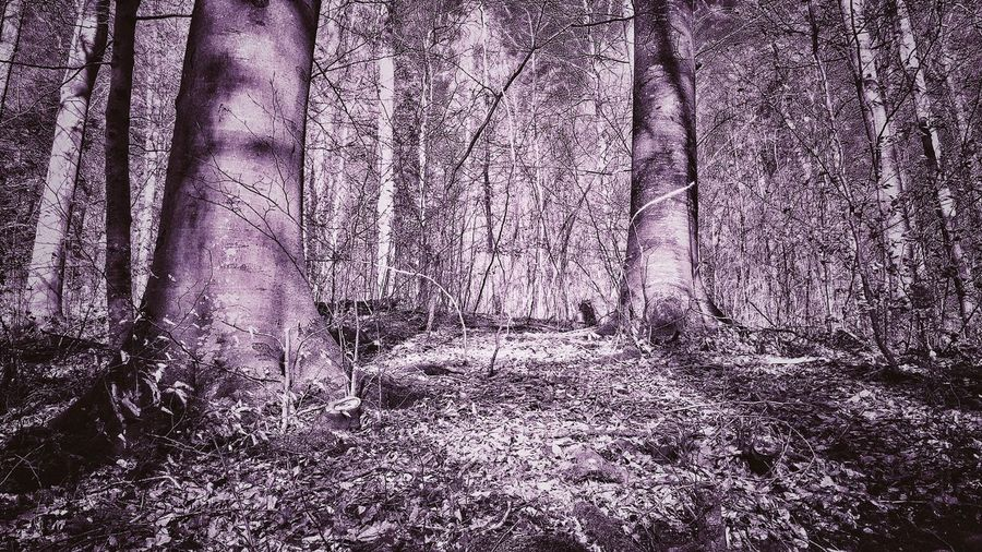 Forest Photography Outside Photography Phone Photography Naturephotography Photographer Photography Photooftheday Pink Picture Pink Color Picoftheday Forest Tree Trunk Tree WoodLand Nature Beauty In Nature Tranquility Landscape Outdoors Branch Tranquil Scene Wilderness Area Tree Area