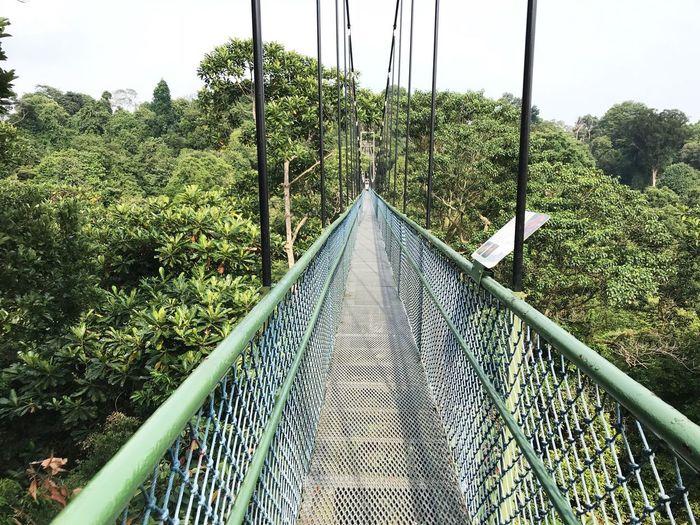 Footbridge amidst trees and plants