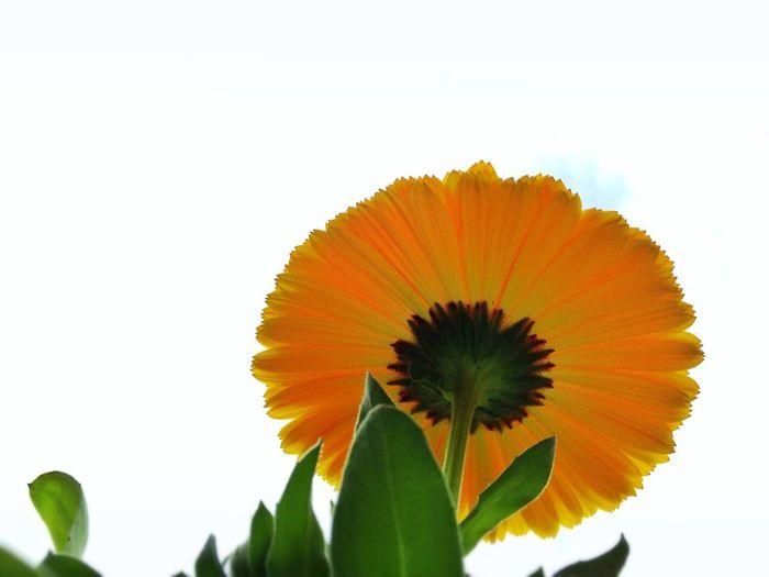 Flowers Spring Flowers Flowerporn 虫メセン