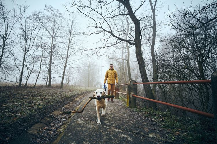 Full length of man and dog walking at park against trees