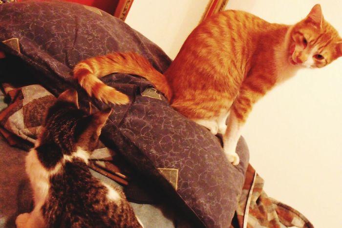 Domestic Animals Pets Domestic Cat One Animal Animal Themes Animal Close-up TBT  Cats 🐱 Catoftheday Cat Photography Cat♡ Catlover Catofeyem Eyemcat