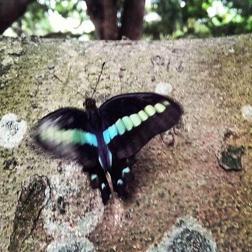 牠好像被踩到翅膀,不能飛了 我把牠從地上送到樹上,不知所措 Butterfly Butter Can't Fly Nature Easter Ready Photography In Motion Showing Imperfection