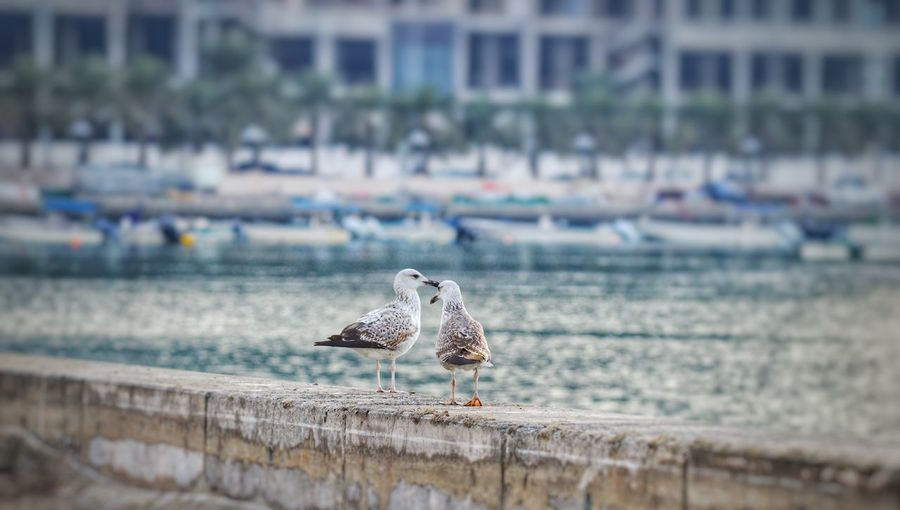 Pair of birds near water source Bird Bird Of Prey Water Spread Wings Sea Close-up Building Exterior Sky Falcon - Bird Harbor Owl Hawk - Bird Hooded Beach Chair Commercial Dock Marina Yellow Eyes Mast Shipyard Container Ship Crane - Construction Machinery My Best Photo 17.62°