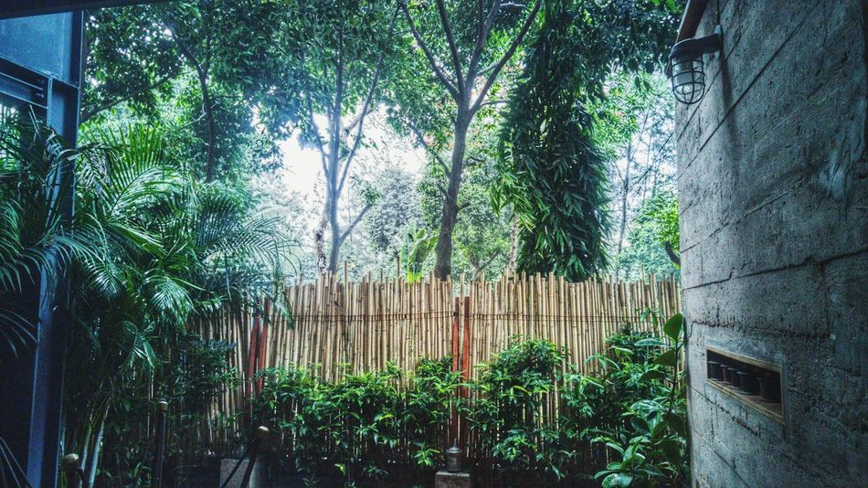 Tree Growth Nature Outdoors Green Color Day No People Bamboo - Plant Plant Beauty In Nature