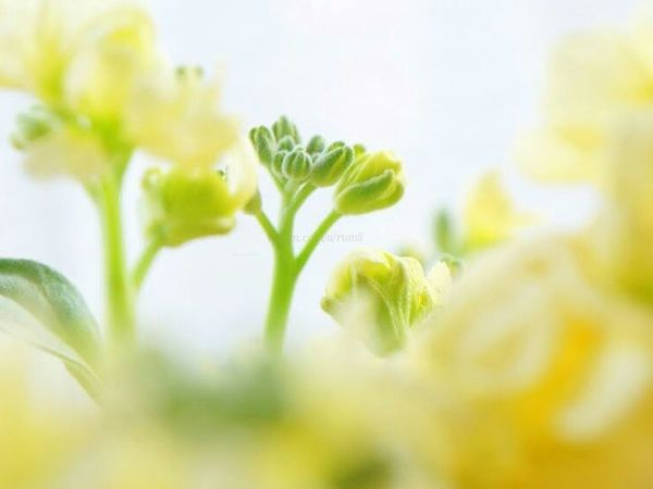Collecting spring colors. Macro_collection Macro_flower Rsa_macro EyeEm Best Shots - Macro / Up Close