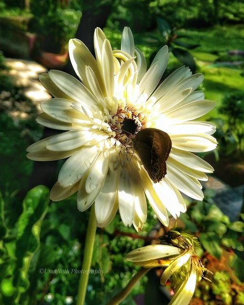 Beauty in Nature EyeEm Best Shots EyeEm Nature Lover EyeEm Selects EyeEm Gallery EyeEm Gerbera Daisy Gerbera Butterfly Butterfly - Insect Flower Head Flower Petal Close-up Plant Blooming Zinnia  Cosmos Flower In Bloom Symbiotic Relationship Insect Daisy Plant Life Blossom Pollination