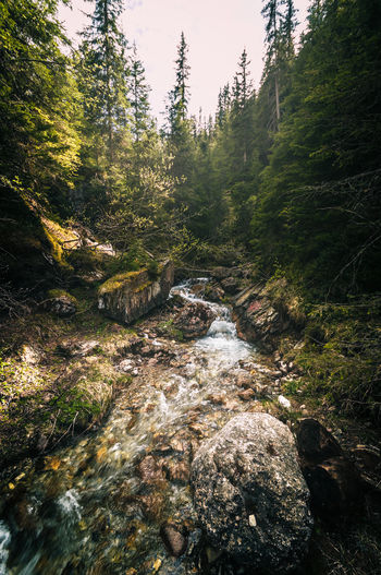 Mystical My Best Photo Forest Plant Tree Land Rock Nature Beauty In Nature Water Solid Tranquility Downloading Day Flowing Water Rock - Object No People Scenics - Nature Flowing Stream - Flowing Water Growth Outdoors WoodLand Trail Südtirol Alto Adige