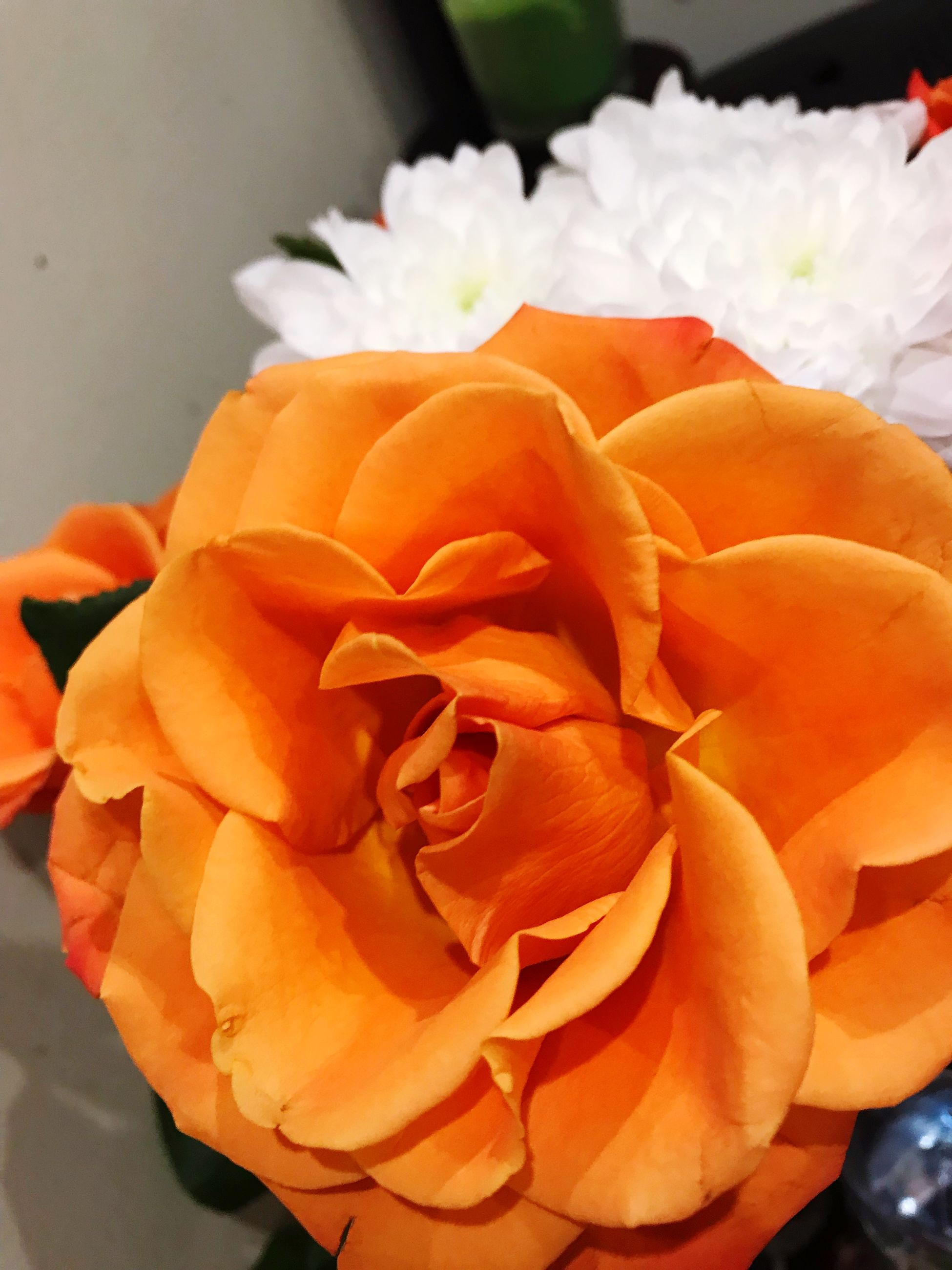 flower, flowering plant, petal, freshness, flower head, beauty in nature, plant, fragility, vulnerability, inflorescence, close-up, orange color, rose, rose - flower, no people, nature, growth, focus on foreground, outdoors, day, bouquet, flower arrangement