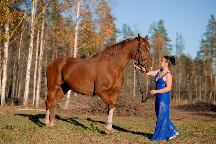 Side view of horse standing on ground