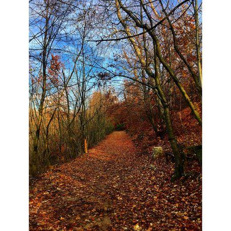 EyeEm Nature Lover Forest Autumn