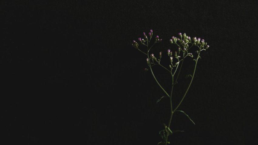 Sony Xperia Xz Takenwithxperia Shotbyxperia Itsme_itsXperia Mobilephotography Manual Processed Art Black Background Black Cloth Unpolished Flower Flowers Leaves