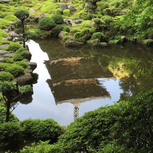 奈良 當麻寺 ぼたん Nara