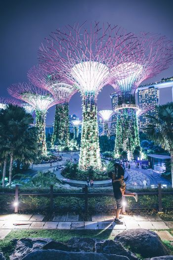 Singapore Illuminated Night Architecture Sky Built Structure Decoration No People Building Exterior Nature Outdoors Light City Tree Plant Multi Colored