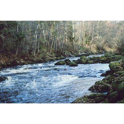 River Riverbank Water Autumn Showmerussia VSCO Vscorussia Vscorussiaclub Vscocam Goodshot Beautiful Nikon Nikonphotography D3100 D3100nikon Russia Karelia November Nature Landscape Forest