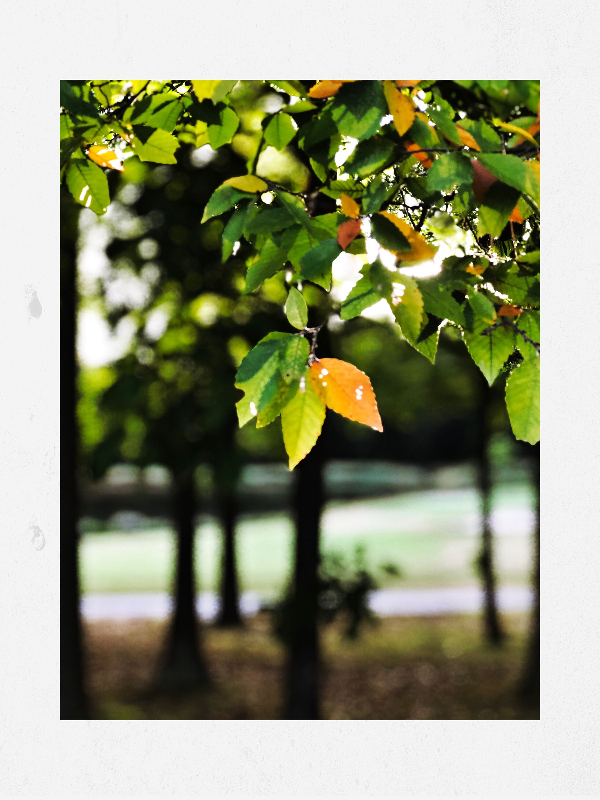 growth, nature, day, leaf, close-up, focus on foreground, tree, beauty in nature, outdoors, no people, freshness, fruit, water, fragility