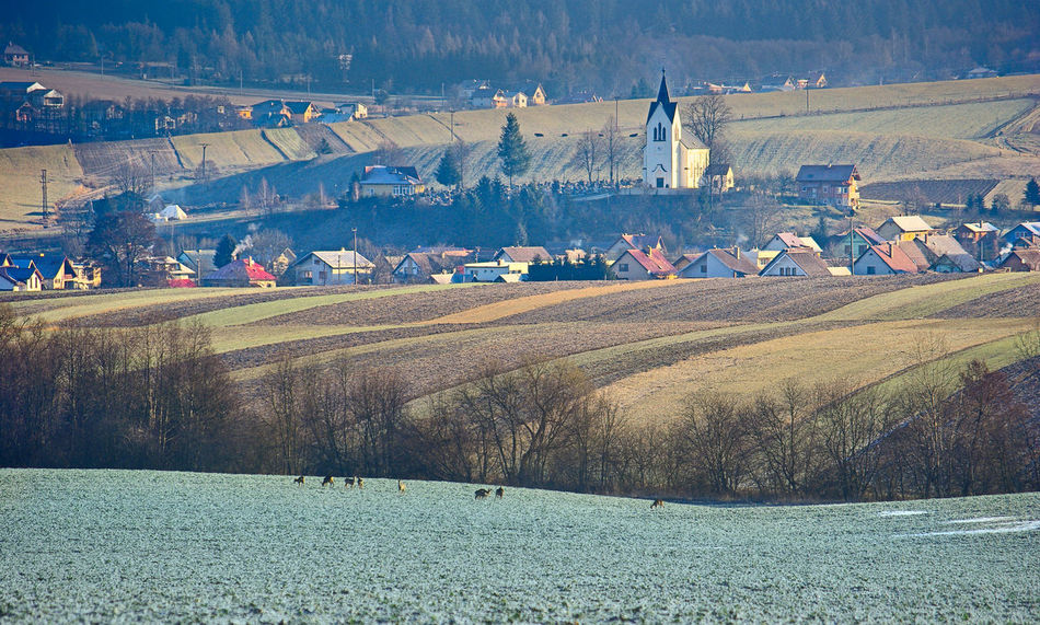 Countryside Views Vista Winter Agricultural Land Countryside Countryside Landscape Herd Of Deer Landscape Layers Village Village View