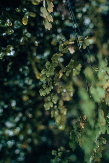 Close-up of wet tree