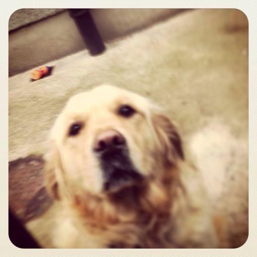 My Doggy ❤