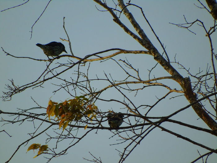 Low angle view of birds perching on bare tree against sky