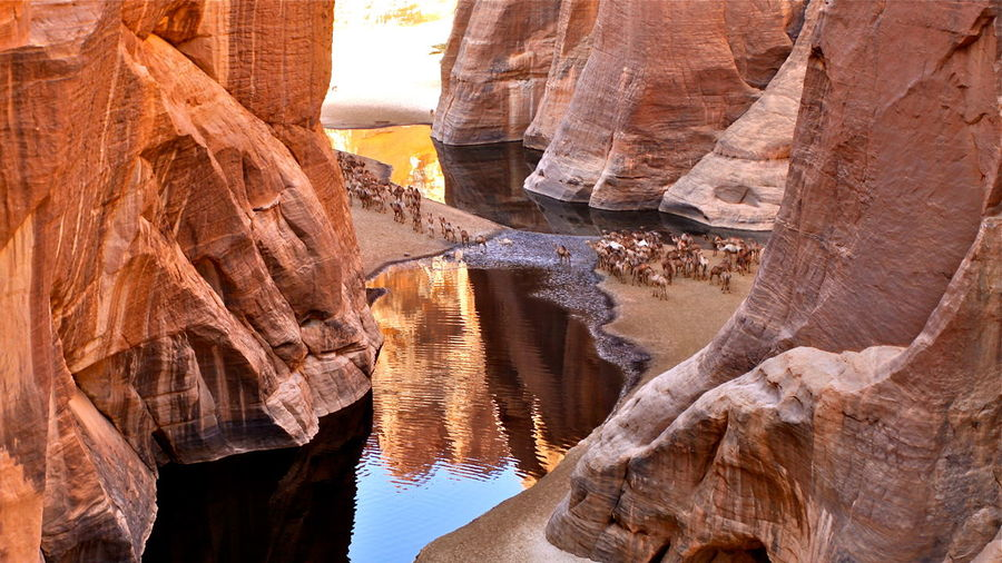 View of cattle crossing river in between  ennedi plateau in chad