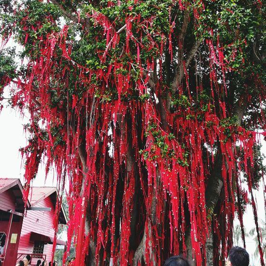 Wishingtree Pantairedang Sekinchan, Malaysia