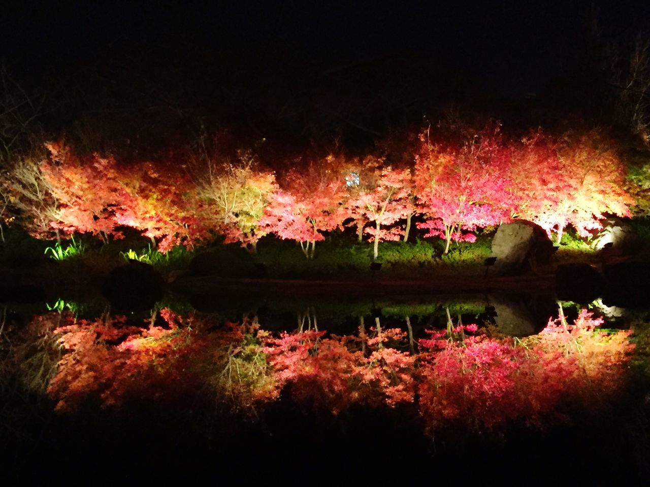 reflection, lake, water, night, nature, tree, outdoors, beauty in nature, no people, scenics, growth, illuminated, sky