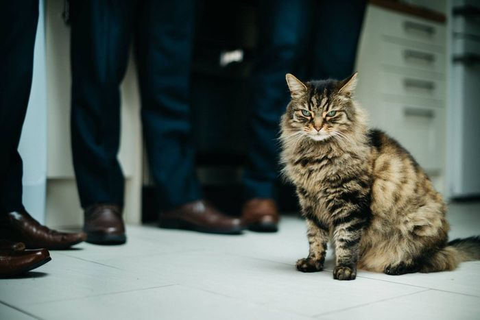 "Meet ""Bossman."" He is kind of a big deal, even on his masters Wedding day. This Cat sat there in front of t he Groomsmen , like a boss! Eyemphotography EyeEm Best Shots EyeEm"