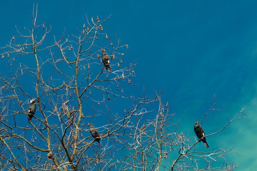 Cormorants Animals In The Wild Outdoors No People Day Sky Perching Birds