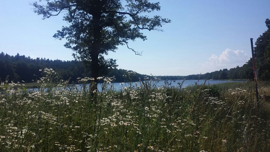 Back home to the lovely Swedish summer Landscape_Collection Eye Em Nature Lover Nature_collection Sweden