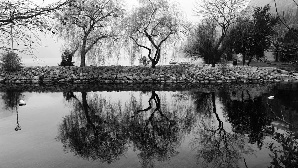 Reflection by Claudia Ioan Tree Nature Water Bare Tree Outdoors Tranquility Lake Lake Garda Beauty In Nature No People Day Sky Mobile Photography VSCO Scenics Landscape Blackandwhite