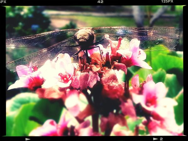 Insects  Walking Around Escaping Random Photo Time #naturelover
