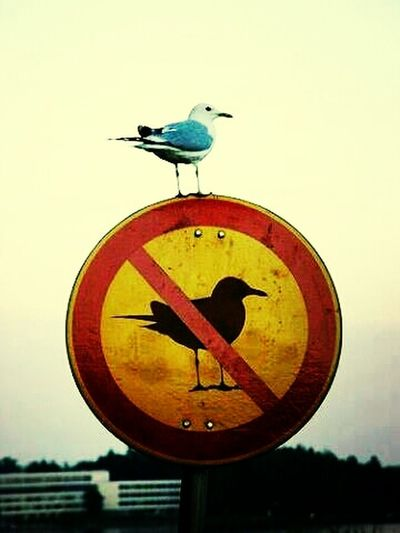 Fuck the System Birds Rebel