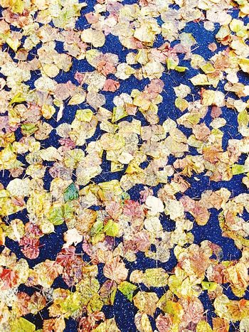 Backgrounds Yellow Autumn No People Close-up Feuilles Foglie Multi Colored Maple Macadam