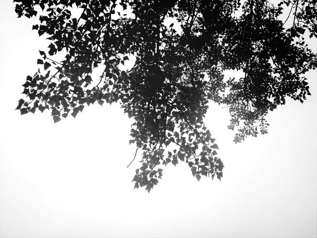 Enjoying Life Autumn Leafs Monochrome