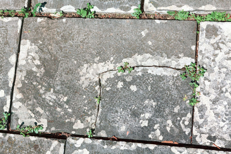 High angle view of flowering plants on wall