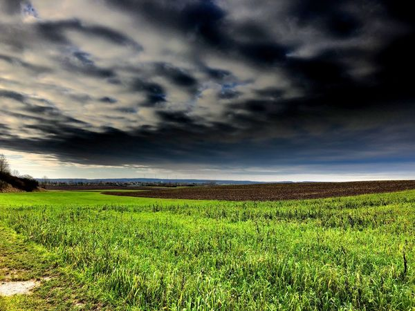 Heute draußen. Today out there. Field Landscape Sky Agriculture Growth Cloud - Sky Nature No People Outdoors Beauty In Nature Day