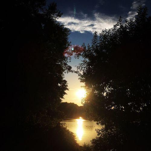 Tree Sunset Sun Tranquil Scene Water Silhouette Lake Nature