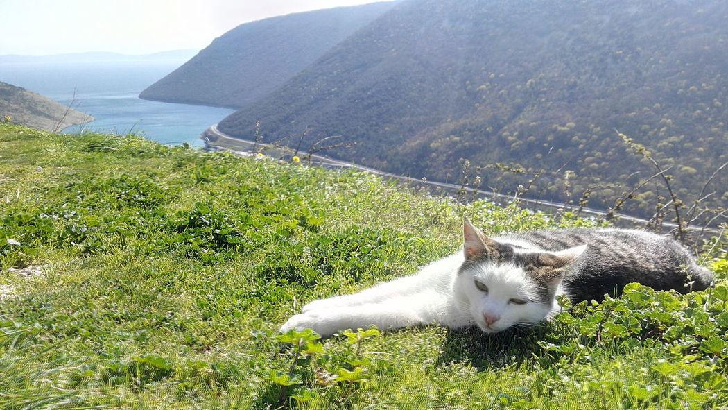 Sunbathing Relaxing Thisislife Cat♡ Sunbathing Cat Croatia ♡ Istria Lazy Warm Light Sleepy First Eyeem Photo
