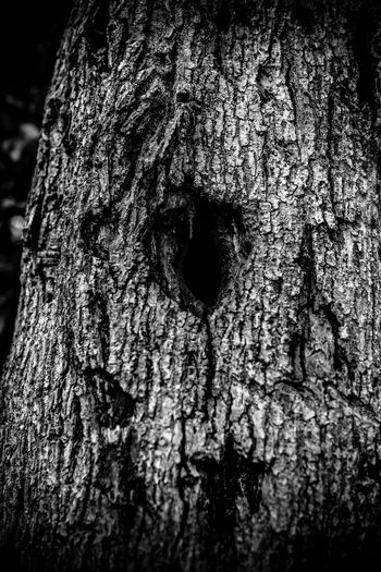 Empty Nest Black & White Black And White Black And White Photography Florida Hole Nature Nest Outdoors Tree