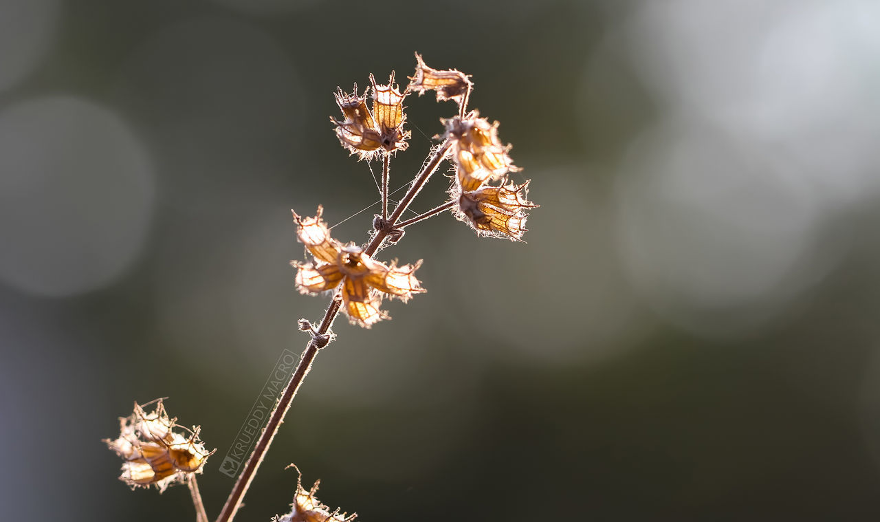no people, nature, close-up, focus on foreground, outdoors, plant, day, beauty in nature, flower, fragility, flower head