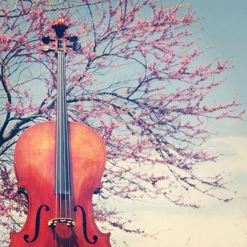 Cello take 2 Art Spring Picoftheday Cello Musician Earlybird Igers Jj  Jj_forum Primeshots Igersmissouri _wg Musicshot_wg Musicintheair Cellist Outside Jj_forum_0423