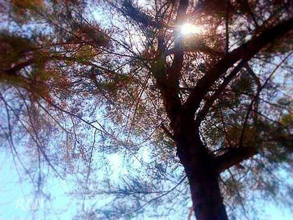 Secret Garden under the shade. Bankok Greenery Beautiful Surroundings Sunny Days Things That Are Green Eyeem Nice Shots