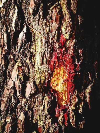 Full Frame No People Close-up Nature Tree Wounded Tree Trunk Tree Art Hurt Injured Abstract Textures And Surfaces Patterns In Nature Tree Bark Tree Bark Closeup Tree Bark Wood EyeEm Gallery Check This Out Vertical not my First Eyeem Photo