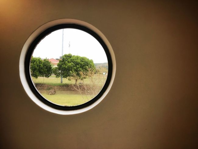 Eye4photography  EyeEm Gallery EyeEm Nature Lover EyeEm Best Shots Window Circle Geometric Shape Tree Day Glass - Material Plant Sunlight Transparent No People Field Outdoors Copy Space Wall - Building Feature Shape Nature Sky Green Color Design Close-up